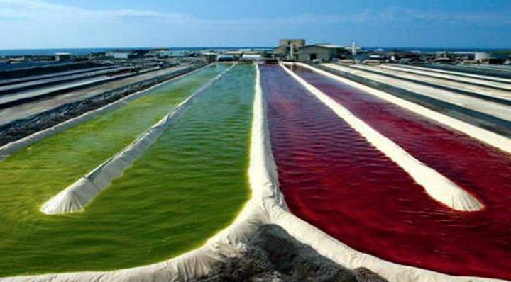 Astaksanyna - algi