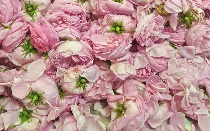ocet z róży damasceńskiej śliwkowy śliwkowy  piwny